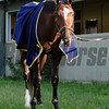 Tonalist<br /> Belmont Park, May 30, 2014<br /> Coglianese Photos/Lauren King