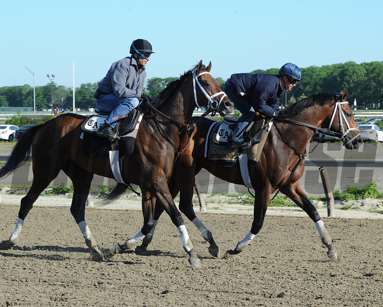 Matterhorn and Commissioner jog at Belmont Park, June 1, 2014.<br /> Coglianese Photo/Susie Raisher