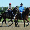 Ride On Curlin at Belmont Park 6/1/2014<br /> Coglianese Photos/Susie Raisher