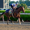 Caption: Tonalist<br /> Belmont and undercard works on June 6, 2014, at Belmont Park in Elmont, N.Y.<br /> FriOrigs1 image130<br /> Photo by Anne M. Eberhardt