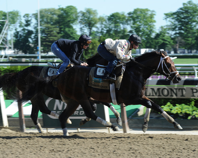 Commissioner jogs at Belmont Park May 25, 2014.<br /> Coglianese Photos/Susie Raisher