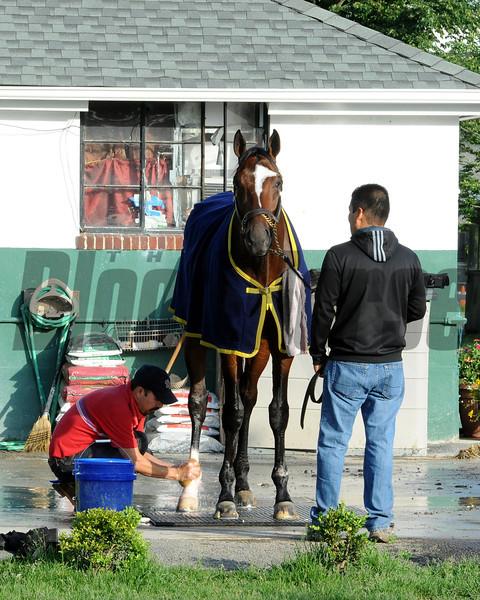Tonalist<br /> Belmont Park, May 30, 2014<br /> Coglianese Photos/Lauren King