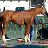 California Chrome during bath.<br /> image 385<br /> Photo by Anne M. Eberhardt