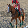 Caption: first day on track since work, California Chrome<br /> Belmont and undercard works on June 2, 2014, at Belmont Park in Elmont, N.Y.<br /> MonOrigs1   image636<br /> Photo by Anne M. Eberhardt