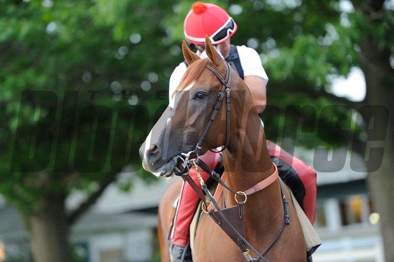 California Chrome jogs at Belmont Park May 26, 2014.<br /> Coglianese Photos