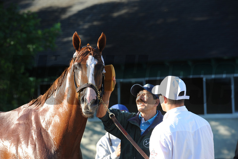 California Chrome<br /> Belmont Park, May 31, 2014<br /> Coglianese Photos