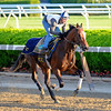 Caption: Tonalist<br /> Belmont and undercard works on June 2, 2014, at Belmont Park in Elmont, N.Y.<br /> MonOrigs1   image597 <br /> Photo by Anne M. Eberhardt