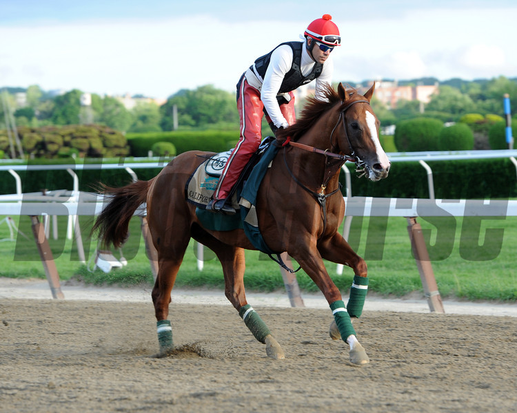 California Chrome<br /> Belmont Park, May 29, 2014<br /> Coglianese Photos/Chelsea Durand