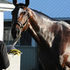 Tonalist at Belmont Park May 25<br /> Coglianese Photos/Susie Raisher