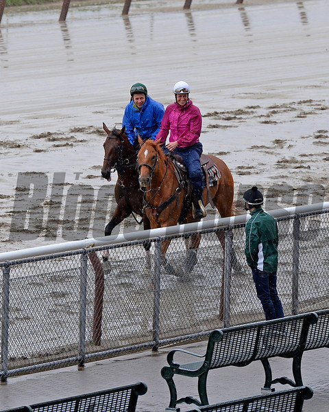 Caption: Samraat with pony on Thursday before Belmont<br /> Belmont and undercard works on June 5, 2014, at Belmont Park in Elmont, N.Y.<br /> Thurs1Origs2 image083<br /> Photo by Anne M. Eberhardt
