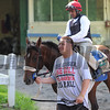 Wicked Strong<br /> Belmont Park, May 30, 2014<br /> Coglianese Photos/Susie Raisher