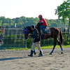Caption: Social Inclusion walks back to barn with trainer Manny Azpurua looking on<br /> Belmont and undercard works on June 2, 2014, at Belmont Park in Elmont, N.Y.<br /> MonOrigs2   image710<br /> Photo by Anne M. Eberhardt