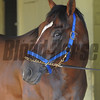 Social Inclusion at Belmont Park May 27, 2014<br /> Coglianese Photos/Susie Raisher