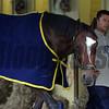 Tonalist<br /> Belmont Park, May 24, 2014<br /> Coglianese Photos/Susie Raisher