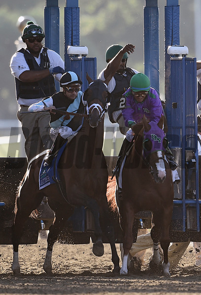 Matterhorn and California Chrome collide at the start of the Belmont Stakes Jue 7.<br /> Mike Corrado Photo