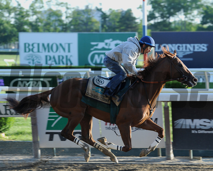 California Chrome<br /> Belmont Park, May 31, 2014<br /> Coglianese Photos/Lauren King