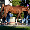 Caption: California Chrome<br /> Belmont and undercard works on June 1, 2014, at Belmont Park in Elmont, N.Y.<br /> SunOrigs1   image409<br /> Photo by Anne M. Eberhardt
