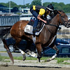 Caption: Artemis Agrotera works<br /> Belmont and undercard works on June 1, 2014, at Belmont Park in Elmont, N.Y.<br /> SunOrigs1   image510<br /> Photo by Anne M. Eberhardt