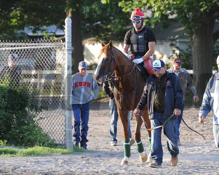 California Chrome<br /> Belmont Park, May 30, 2014<br /> Coglianese Photos/Lauren KIng