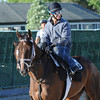 Matterhorn, Belmont Park, June 1, 2014<br /> Coglianese Photos/Susie Raisher