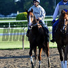 California Chrome<br /> Belmont Park, May 31, 2014<br /> Coglianese Photos
