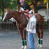 California Chrome at Belmont Park May 27, 2014<br /> Coglianese Photos/Susie Raisher