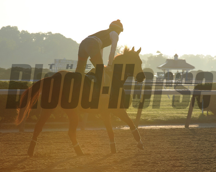 California Chrome at Belmont Park May 25.<br /> Coglianese Photos/Susie Raisher