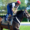 Caption: Ride On Curlin with Bryan Beccia<br /> Belmont and undercard works on June 1, 2014, at Belmont Park in Elmont, N.Y.<br /> SunOrigs1   image501<br /> Photo by Anne M. Eberhardt