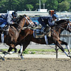 Commissioner and Matterhorn work at Belmont Park.<br /> Coglianese Photos/Susie Raisher