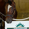 Caption: Morning after in the Belmont barn area with Tonalist and California Chrome<br />  on June 8, 2014, at Belmont Park in Elmont, N.Y.<br /> MorningAfterBelmont image144<br /> Photo by Anne M. Eberhardt