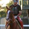 California Chrome at Belmont Park May 27, 2014<br /> Coglianese Photos