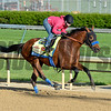Caption:Hoppertunity with Rosie Napravnik<br /> Kentucky Derby contenders in training at the Churchill Downs in Louisville, Ky., on April 19, 2014.<br /> KentuckyDerby 1Works4_23 image<br /> Photo by Anne M. Eberhardt