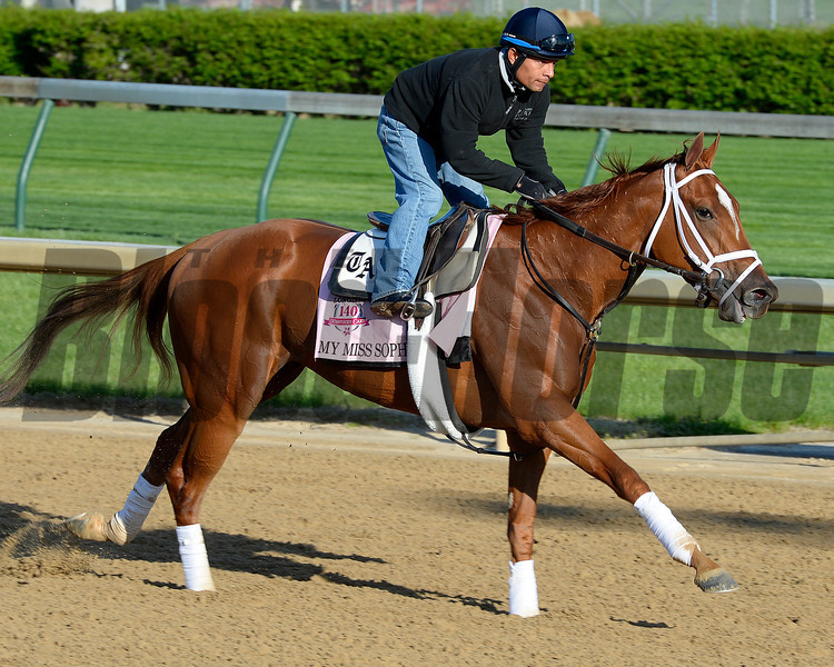 Caption: My Miss Sophia<br /> Kentucky Derby contenders in training at the Churchill Downs in Louisville, Ky., on April 19, 2014.<br /> KentuckyDerby 1Works4_23 image109<br /> Photo by Anne M. Eberhardt