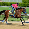 Caption:Hoppertunity with Rosie Napravnik<br /> Kentucky Derby contenders in training at the Churchill Downs in Louisville, Ky., on April 19, 2014.<br /> KentuckyDerby 1Works4_23 image033<br /> Photo by Anne M. Eberhardt