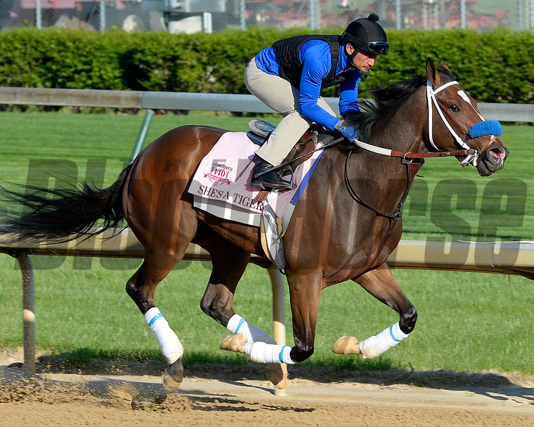 Caption: She's A Tiger<br /> Kentucky Derby contenders in training at the Churchill Downs in Louisville, Ky., on April 19, 2014.<br /> KentuckyDerby 2Works4_23 image191<br /> Photo by Anne M. Eberhardt