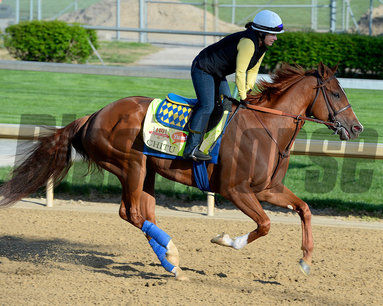 Caption: Chitu with Dana Barnes<br /> Kentucky Derby contenders in training at the Churchill Downs in Louisville, Ky., on April 19, 2014.<br /> KentuckyDerby 2Works4_23 image244<br /> Photo by Anne M. Eberhardt