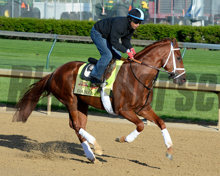 Caption: Danza<br /> Kentucky Derby contenders in training at the Churchill Downs in Louisville, Ky., on April 19, 2014.<br /> KentuckyDerby 1Works4_23 image124<br /> Photo by Anne M. Eberhardt