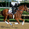 Caption: Rosalind<br /> Kentucky Derby contenders in training at the Churchill Downs in Louisville, Ky., on April 19, 2014.<br /> KentuckyDerby 1Works4_23 image082<br /> Photo by Anne M. Eberhardt