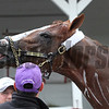 California Chrome Churchill Downs Chad B. Harmon