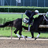 Intense Holiday Churchill Downs Chad B. Harmon