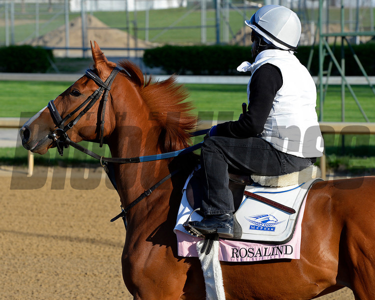 Caption: Rosalind<br /> Kentucky Derby contenders in training at the Churchill Downs in Louisville, Ky., on April 19, 2014.<br /> KentuckyDerby 1Works4_23 image977<br /> Photo by Anne M. Eberhardt