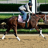 Caption: Unbridled Forever<br /> Kentucky Derby contenders in training at the Churchill Downs in Louisville, Ky., on April 19, 2014.<br /> KentuckyDerby 2Works4_23 image212<br /> Photo by Anne M. Eberhardt