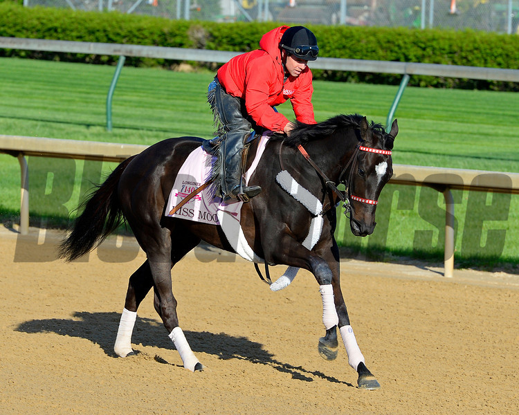 Caption: Kiss Moon with Otto Thorwarth<br /> Kentucky Derby contenders in training at the Churchill Downs in Louisville, Ky., on April 19, 2014.<br /> KentuckyDerby 1Works4_23 image117<br /> Photo by Anne M. Eberhardt