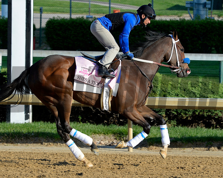 Caption: She's A Tiger<br /> Kentucky Derby contenders in training at the Churchill Downs in Louisville, Ky., on April 19, 2014.<br /> KentuckyDerby 2Works4_23 image149<br /> Photo by Anne M. Eberhardt