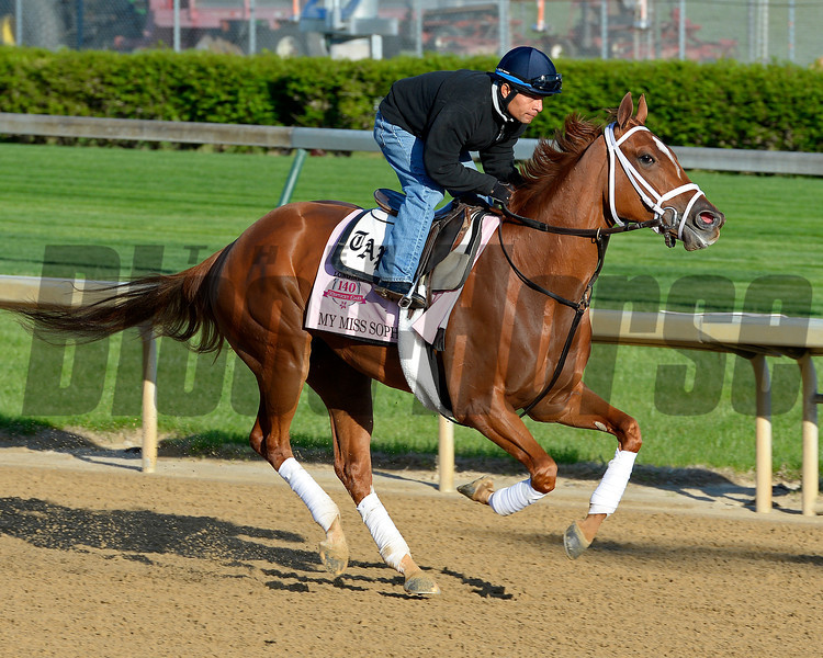 Caption: My Miss Sophia with Humberto Zmora<br /> Kentucky Derby contenders in training at the Churchill Downs in Louisville, Ky., on April 19, 2014.<br /> KentuckyDerby 1Works4_23 image109<br /> Photo by Anne M. Eberhardt