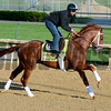 Caption:<br /> Kentucky Derby contenders in training at the Churchill Downs in Louisville, Ky., on April 19, 2014.<br /> KentuckyDerby 1Works4_23 image<br /> Photo by Anne M. Eberhardt