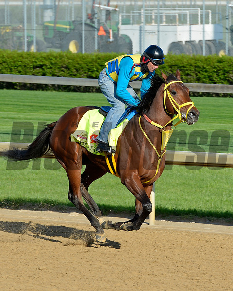 Caption: Wildcat Red<br /> Kentucky Derby contenders in training at the Churchill Downs in Louisville, Ky., on April 19, 2014.<br /> KentuckyDerby 2Works4_23 image202<br /> Photo by Anne M. Eberhardt