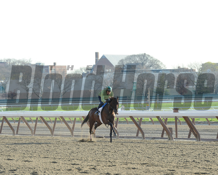 Samraat works out at Belmont Park on April 25, 2014 in preparation for the 2014 Kentucky Derby. <br /> Coglianese Photos/Susie Raisher