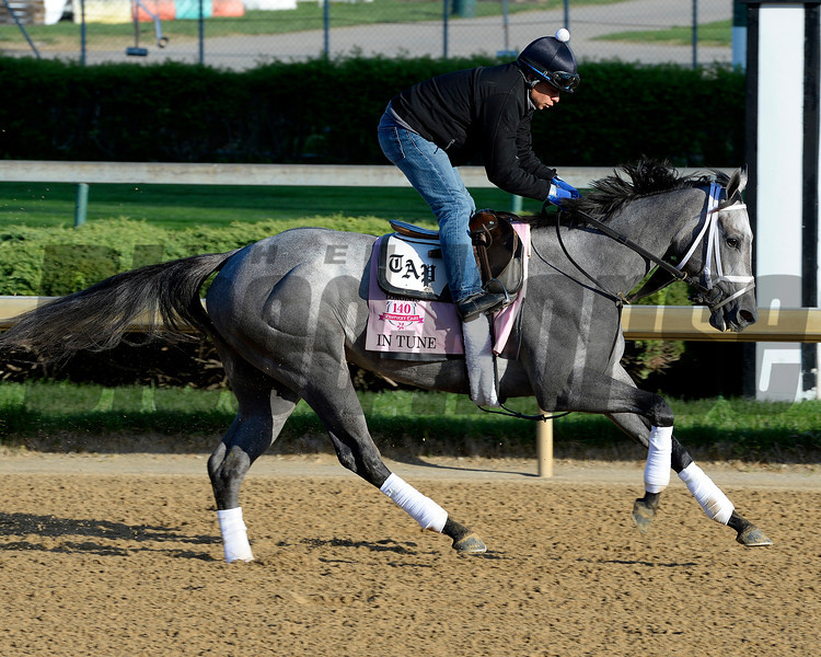 Caption: In Tune<br /> Kentucky Derby contenders in training at the Churchill Downs in Louisville, Ky., on April 19, 2014.<br /> KentuckyDerby 1Works4_23 image059<br /> Photo by Anne M. Eberhardt