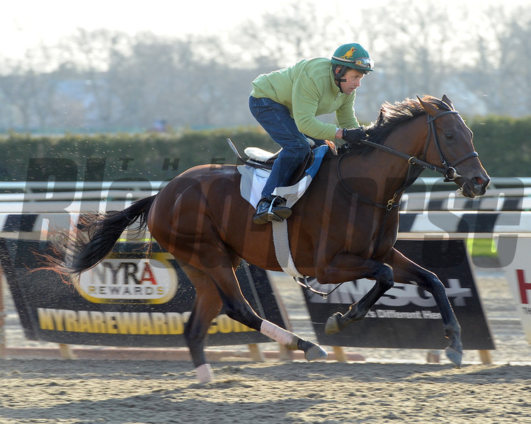 Samraat works out at Belmont Park on April 25, 2014 in preparation for the 2014 Kentucky Derby<br /> Coglianese Photos/Susie Raisher